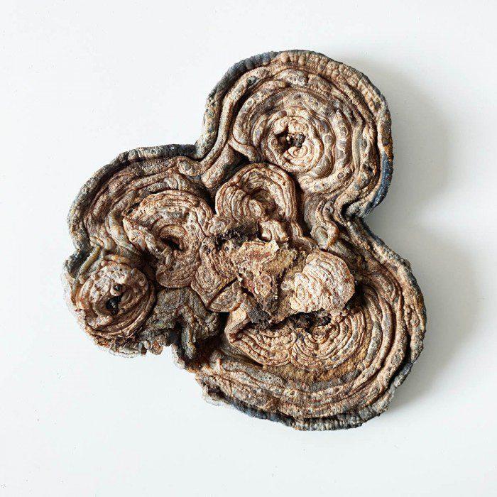 flor de calcedonia natural