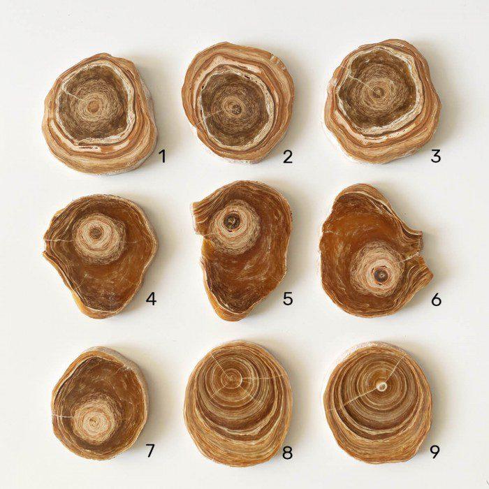 placa de aragonito marrón